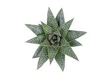 Aloe-Flow