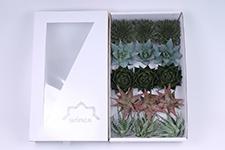 Aloe-Mix-10cm-Wincx