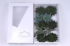 Aloe-Mix-12cm-Wincx