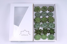 Echeveria-Green-Mix-8cm-Wincx