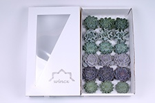 Echeveria-Ice-Mix-8cm-Wincx