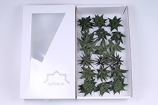 Haworthia-Mix-8cm-Wincx